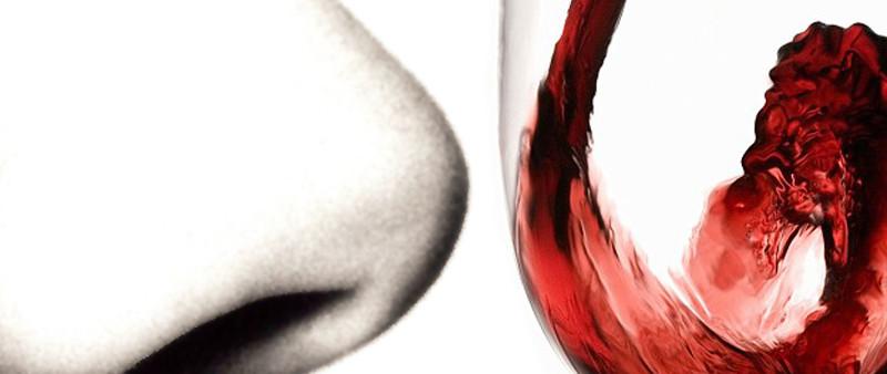 degustazione-vino.esame-olfattivo